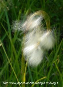 vento (2)
