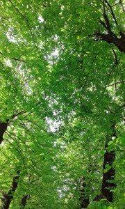 alberid