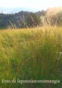 E camminerò in mezzo all'erba alta dai molti colori