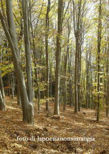 cedi la strada agli alberi