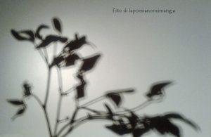 Gioco di ombre