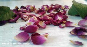 petali e petali