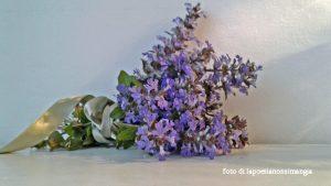 fioridalgiardino