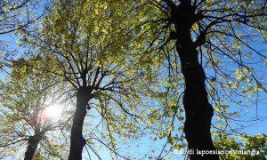alberialberi