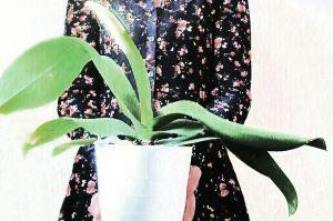 una pianta