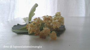 fioriditiglio