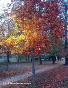 albero autunnale foglie gialle e rosse