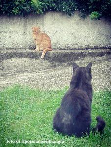 gatti che hanno litigato