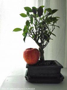 mela più bonsai