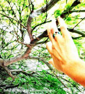 mano su ramo